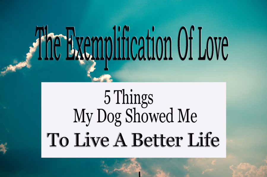 5 things my dog showed me to live a better life