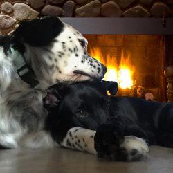 Lotis & Lillie